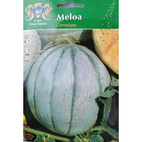 Meloa Cantalupo