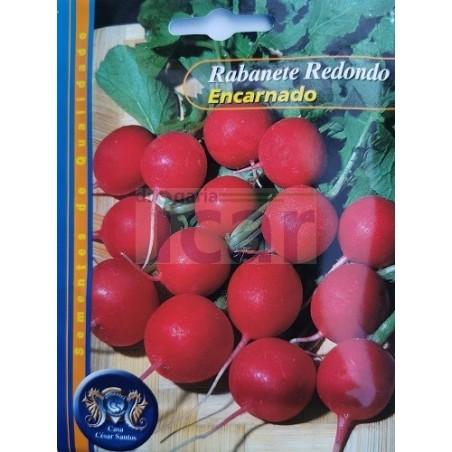 Rabanete Redondo Encarnado10gr